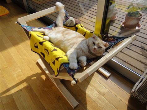 cat hammock bed how to keep cats cool healthy paws pet insurance