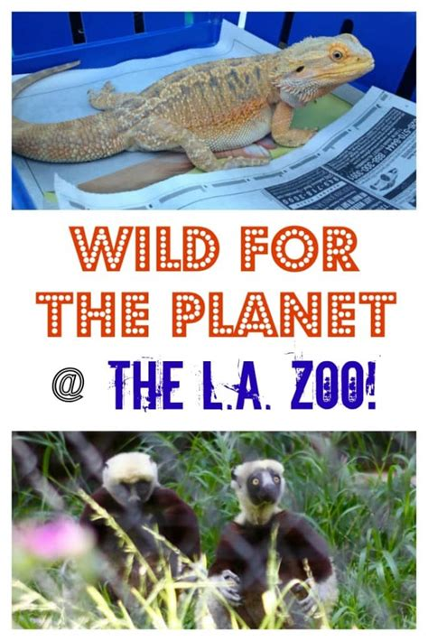 Get Wild For The Planet At The La Zoo Socal Field Trips Image Gallery La Zoo Discount Tickets