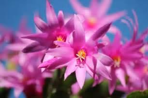 flori de flori iarna plante cu flori de iarna