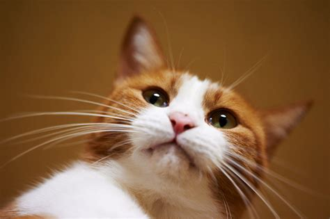 hd cats glance whiskers animals high quality picture
