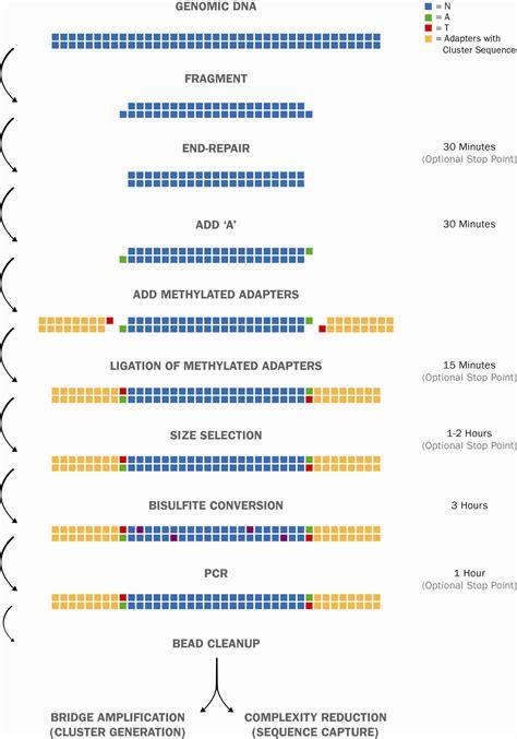 illumina sequence nextflex bisulfite seq kit for illumina sequencing order
