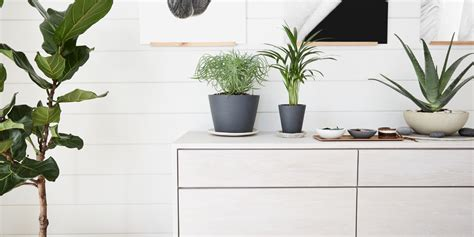 how to bring a plant back to life 100 how to bring a plant back to life how plants