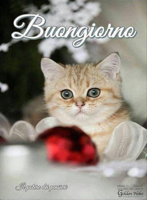 buongiorno saluturi  buongiorno gatti animali divertenti
