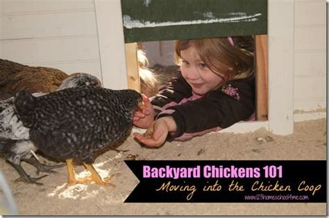 backyard chickens 101 17 curated foul fever ideas by duhwoods easy diy