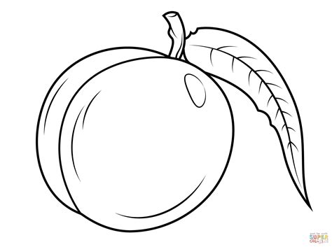 lychee fruit drawing 100 lychee fruit drawing clipart of a lychee fruit