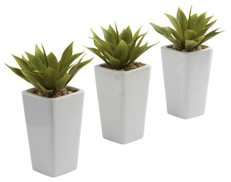 white indoor planter mini agave and white planter set set of 3 contemporary