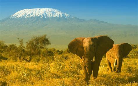 Find In Kenya Animals In Kenya 1 High Resolution Wallpaper Hivewallpaper