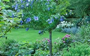 don t downsize your trees upsize a shrub telegraph