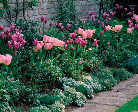 sweetly scented annuals fine gardening