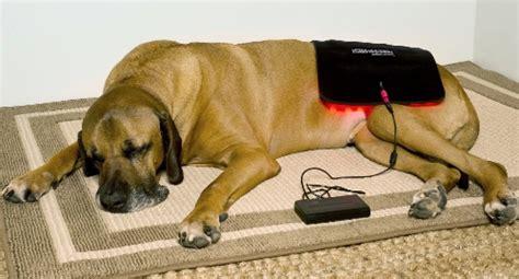 canine laser therapy for arthritis arthritis according to quot gospel quot equine light