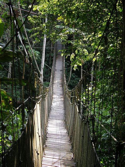 canopy amazon canopy walk amazon rainforest peru photography