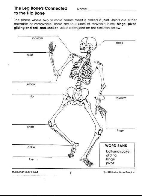 Skeletal System Label Worksheet by Joints Of The Worksheet Search Pinteres