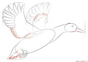 How To Draw Ducks how to draw a mallard duck step by step drawing tutorials