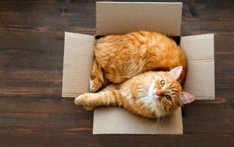 cats for adoption kitten adoption related keywords kitten adoption