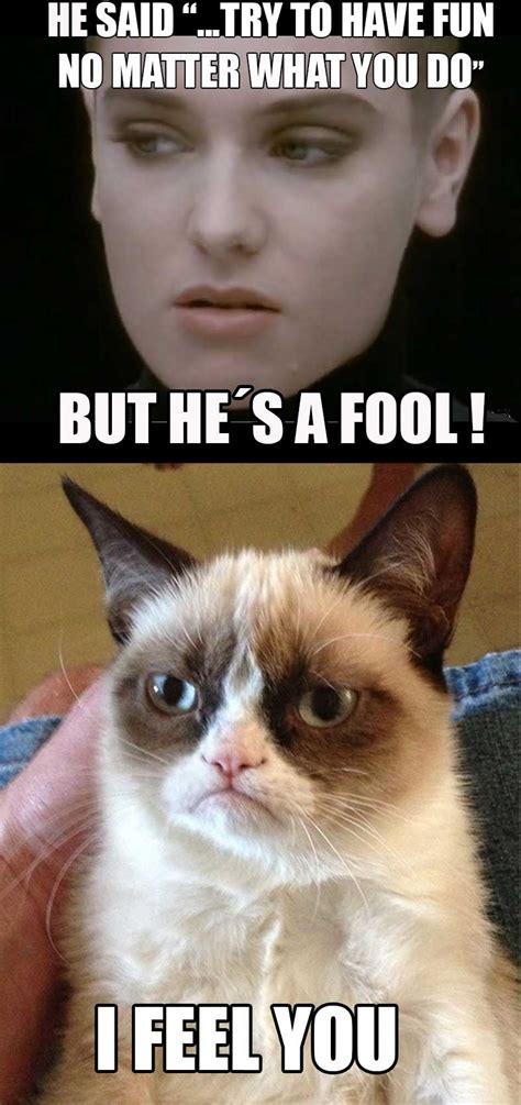 Cat Meme Images - image 533667 grumpy cat know your meme