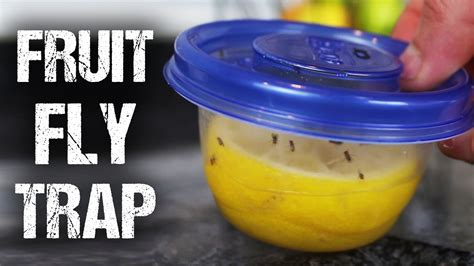 fruit fly trap make a great smelling reusable fruit fly trap