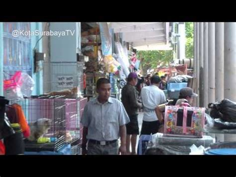 Pakan Udang Di Surabaya pasar ikan hias gunung sari surabaya by helmi kahaf