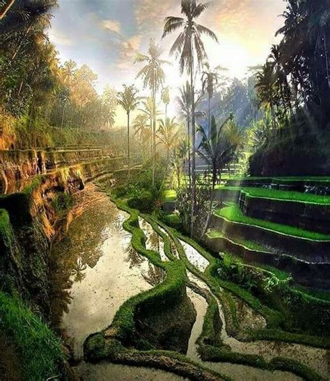 Nature Indonesia tegalalang bali indonesia 169 beautiful places to travel