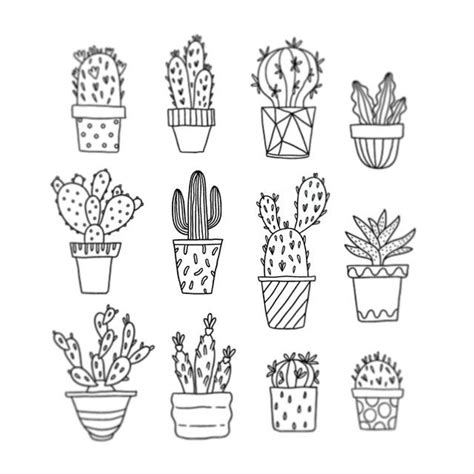 doodle draw the cactus clipart line drawing pencil and in color cactus