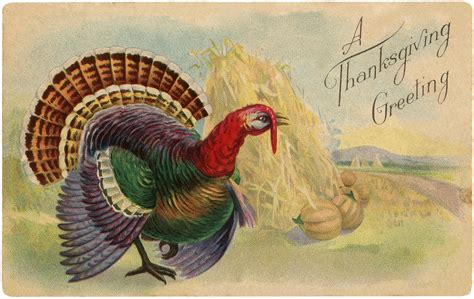 colorful turkey vintage thanksgiving turkey postcard colorful the