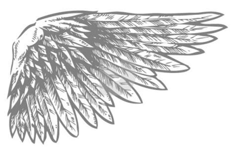 Bird Wings Outline by Bird Wing Template Templates Poem Book And Bird Wings