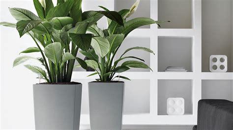 indoor plant hire office plants indoor plants