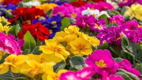 imagenes de kevin flores c 243 mo las plantas con flores evolucionaron y conquistaron
