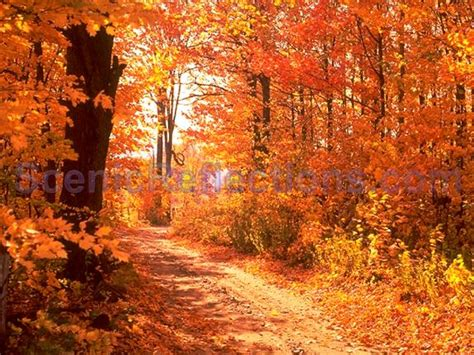colors of autumn freeware colors of autumn screensaver at