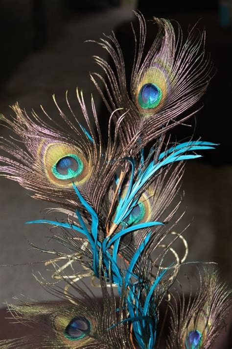 love  curvy peacock feathers  added touch