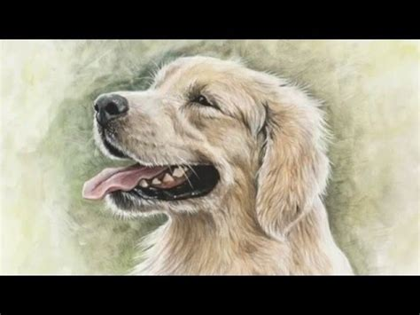 golden retriever whiskers how to draw white whiskers on a golden retriever by