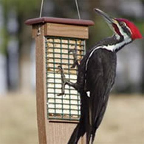 download pileated woodpecker suet feeder plans plans free