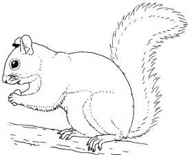 squirrel coloring pages printable squirrel coloring pages coloring me