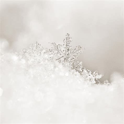 white snowflake photograph by beth riser