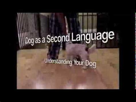 fenzi sports academy as a second language learn to read dogs fenzi sports academy class