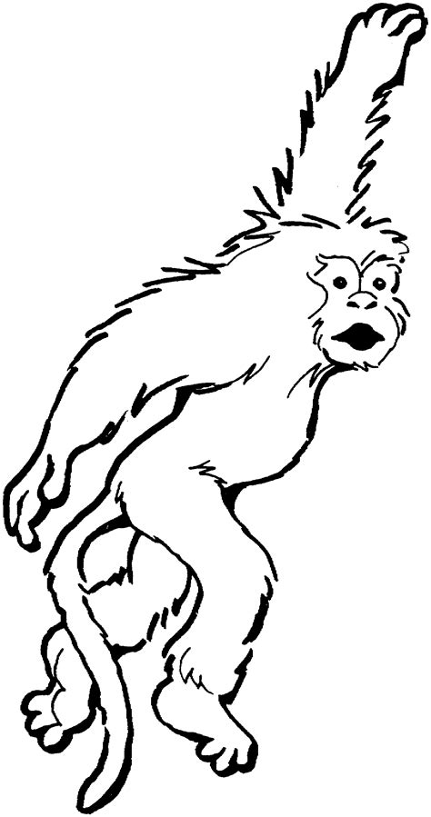 how to draw a monkey swinging on a vine image gallery monkey drawing swinging