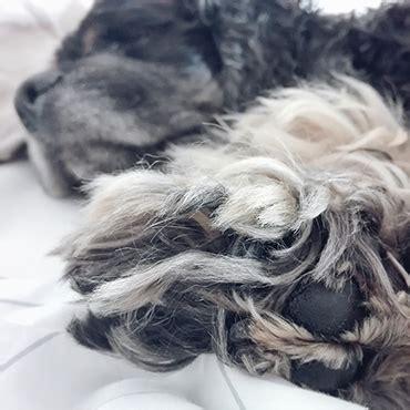wieviel schlaf braucht ein 2 jã hriges wie viel schlaf ben 246 tigt ein hund tierisch wohnen