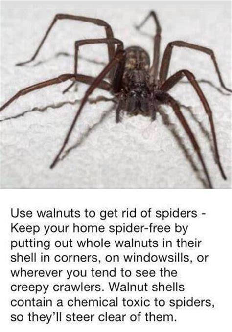 how to get rid of spiders safely this