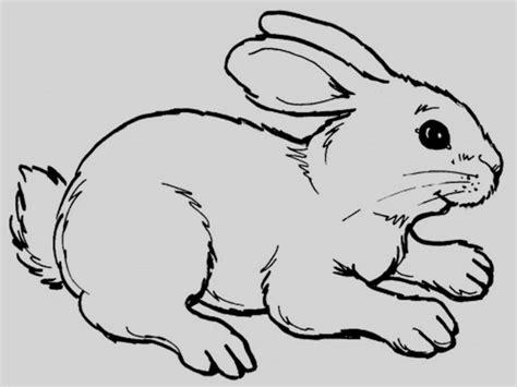 imagenes para dedicar cumpleaños conejo para colorear dibujos de conejos im genes y fotos