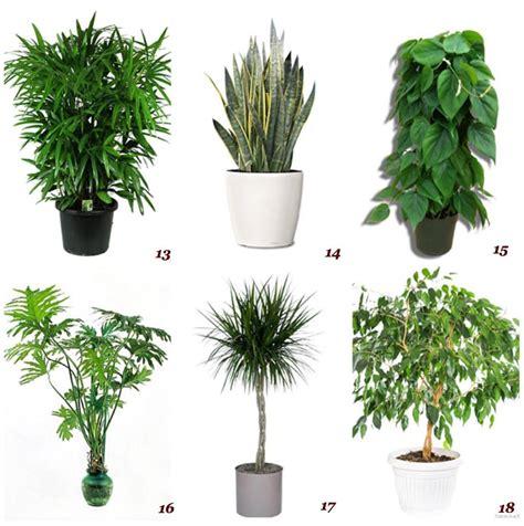 piante da interno purificano l ambienti detox con l aiuto delle piante purificanti