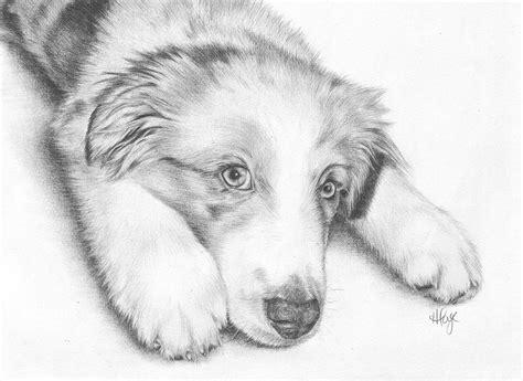 i m sorry australian shepherd puppy by heather page