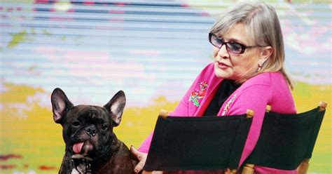 Carrie Fishers Home Carrie Fisher S Dog Gary Is The Real Star Of Star Wars