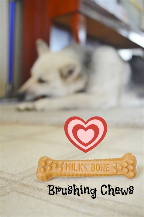 are milk bones bad for dogs milk bone crafts