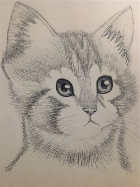 Animal Pencil animals pencil sketching drawing cool collections pencil