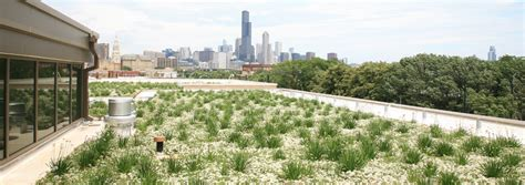 liveroof green roof systems system options liveroof hybrid green roofs