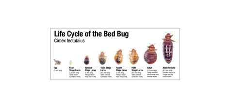 Exterminators For Bed Bugs by Bed Bug Exterminator Bed Furniture Decoration