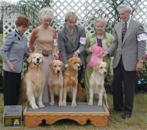 golden retriever breeders kansas city golden retriever club kansas city photo