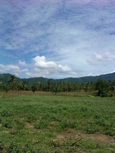 Jual Belut Siap Panen jual tanah di sulawesi utara tanah disewakan sulawesi utara