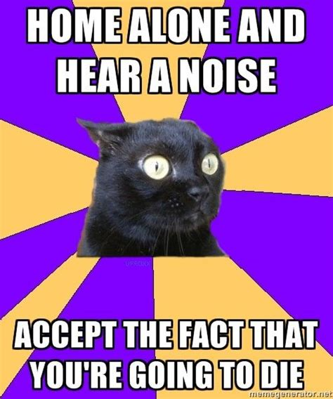 Anxiety Cat Meme - 17 best images about cat memes on pinterest anxiety