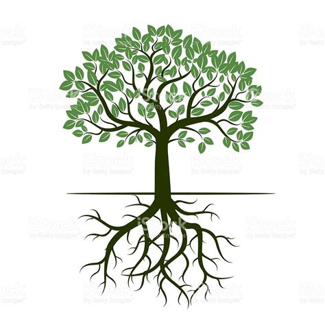 of tree green tree and roots vector illustration stock vector