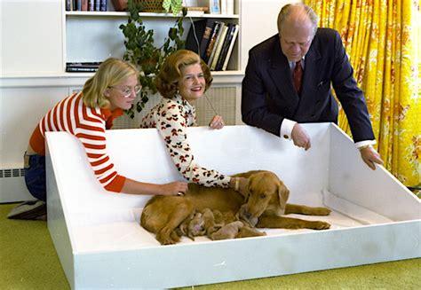 golden retriever puppies medford oregon gerald ford s liberty presidential pet museum